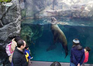 今日熱門文章:福島水族館(環境水族館)アクアマリンふくしま(Aquamarine Fukushima )