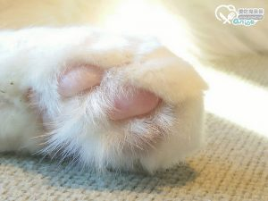 今日熱門文章:愛貓人的天堂.東京澀谷猫カフェmocha咖啡,好多貓貓啊啊啊!!!(圖超多)
