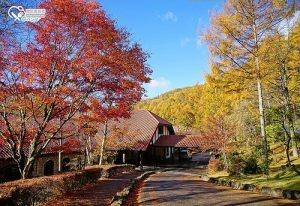今日熱門文章:長野飯店.蓼科東急飯店,絕美的紅葉景觀飯店