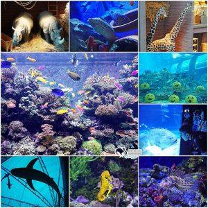 今日熱門文章:新加坡.S.E.A 海洋館