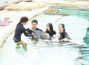 今日熱門文章:聖淘沙名勝世界:海豚園,海豚互動體驗也太可愛了吧!