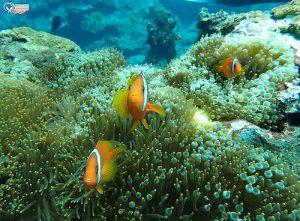 今日熱門文章:蘭嶼潛水.開元港、玉女岩、雙獅岩、藍洞、機場外礁、八代灣沈船 (岸潛+船潛)