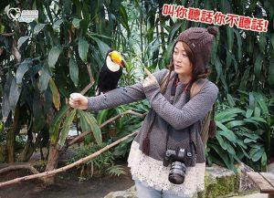 今日熱門文章:島根旅遊.松江貓頭鷹花園,好多鳥兒玩瘋啦!