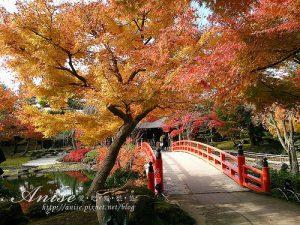今日熱門文章:島根旅遊.由志園,美麗的日式庭園