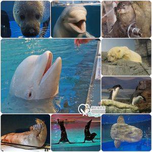 今日熱門文章:橫濱景點.八景島海島樂園,日本最大水族館玩好嗨!
