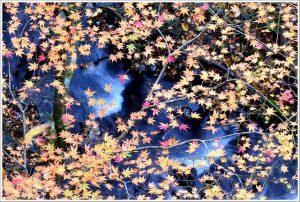 今日熱門文章:秋田.抱返溪谷散策(抱返り渓谷)