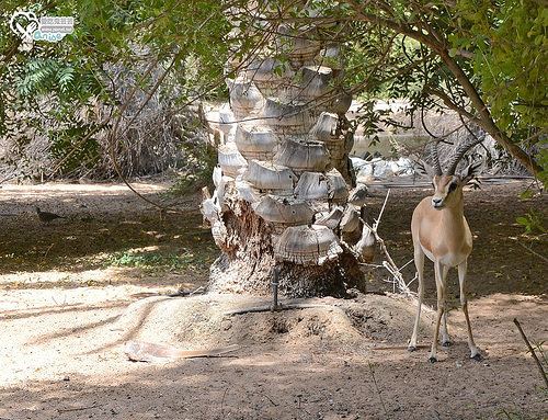沙漠綠洲渡假村Al Maha Desert Resort & Spa @杜拜小旅行 @愛吃鬼芸芸