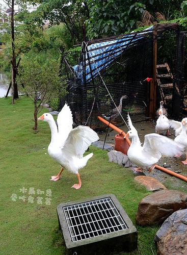 宜蘭民宿.水鳥印象,無尾港旁的自在民宿(有超爆笑瘋鵝跟皮老闆!) @愛吃鬼芸芸