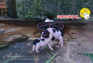 今日熱門文章:宜蘭冬山.宜農牧場,小小豬好可愛啊啊啊!