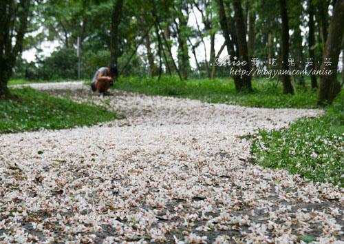 2011油桐花季 – 三義秘密小徑 (下) – 苗51-1、峰州→久松、四月雪小徑→五月雪小徑(5/6) @愛吃鬼芸芸