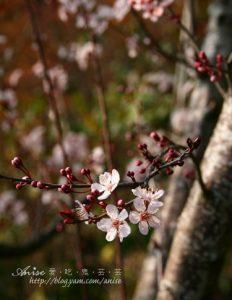今日熱門文章:遠眺碧湖的美麗民宿~清境五里坡山莊