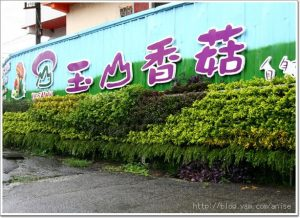 今日熱門文章:99.07.27 新社‧玉山香菇行