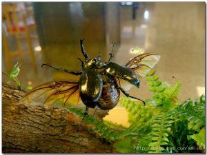 今日熱門文章:98.08.12  國立自然科學博物館初體驗