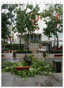 今日熱門文章:96.10.07 颱風天的豐盛京星早餐