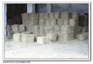 今日熱門文章:95.04.15 花蓮豪華遊(10)–兆豐農場 II
