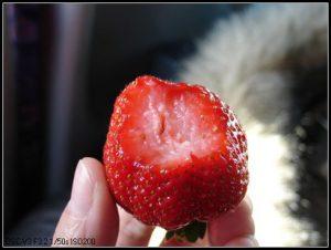 今日熱門文章:北海道冰凍餵豬泡湯之旅(21)–回程(完)