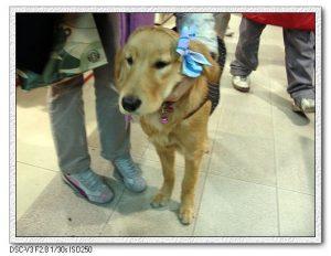 今日熱門文章:94.12.16 台北東區的狗狗西施