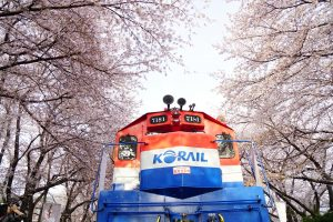 今日熱門文章:釜山旅遊.韓國櫻花NO.1鎮海櫻花祭:余佐川櫻花道、慶和車站(跌倒阿姨遊記)