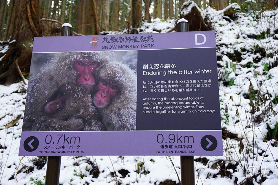 地獄谷野猿公苑雪猴一日遊( 東京↔長野 ),再訪終於看到猴子泡湯啦!