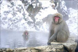 今日熱門文章:地獄谷野猿公苑雪猴一日遊( 東京↔長野 ),再訪終於看到猴子泡湯啦!