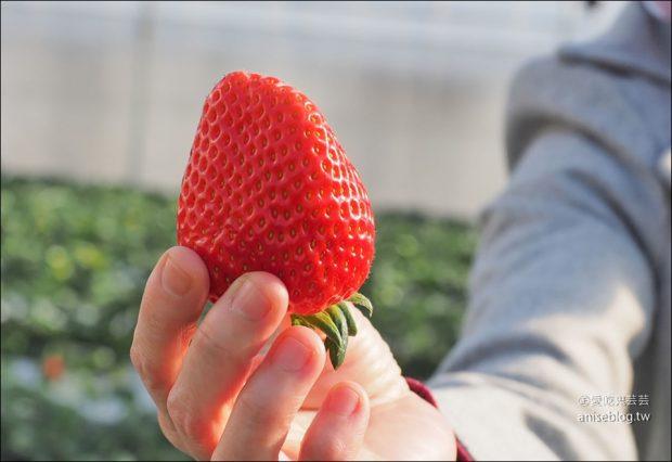 日本採草莓