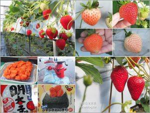 今日熱門文章:【鑽石之路】白草莓、桃子草莓、茨城草莓45分鐘吃到飽(大洗ベリーズ Oarai Berry's) + 明太子工廠好好買
