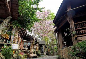 今日熱門文章:阿將的家23咖啡館 | 阿里山上的世外桃源