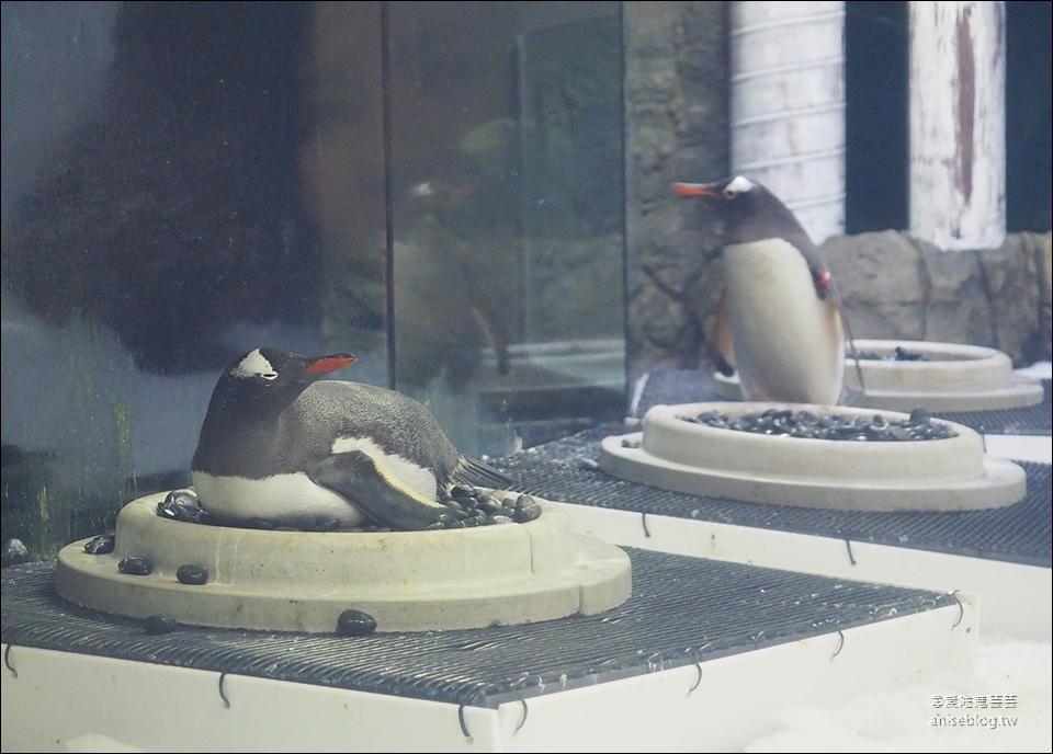 雪梨景點套票 | 雪梨塔+水族館+野生動物園+杜莎夫人蠟像館