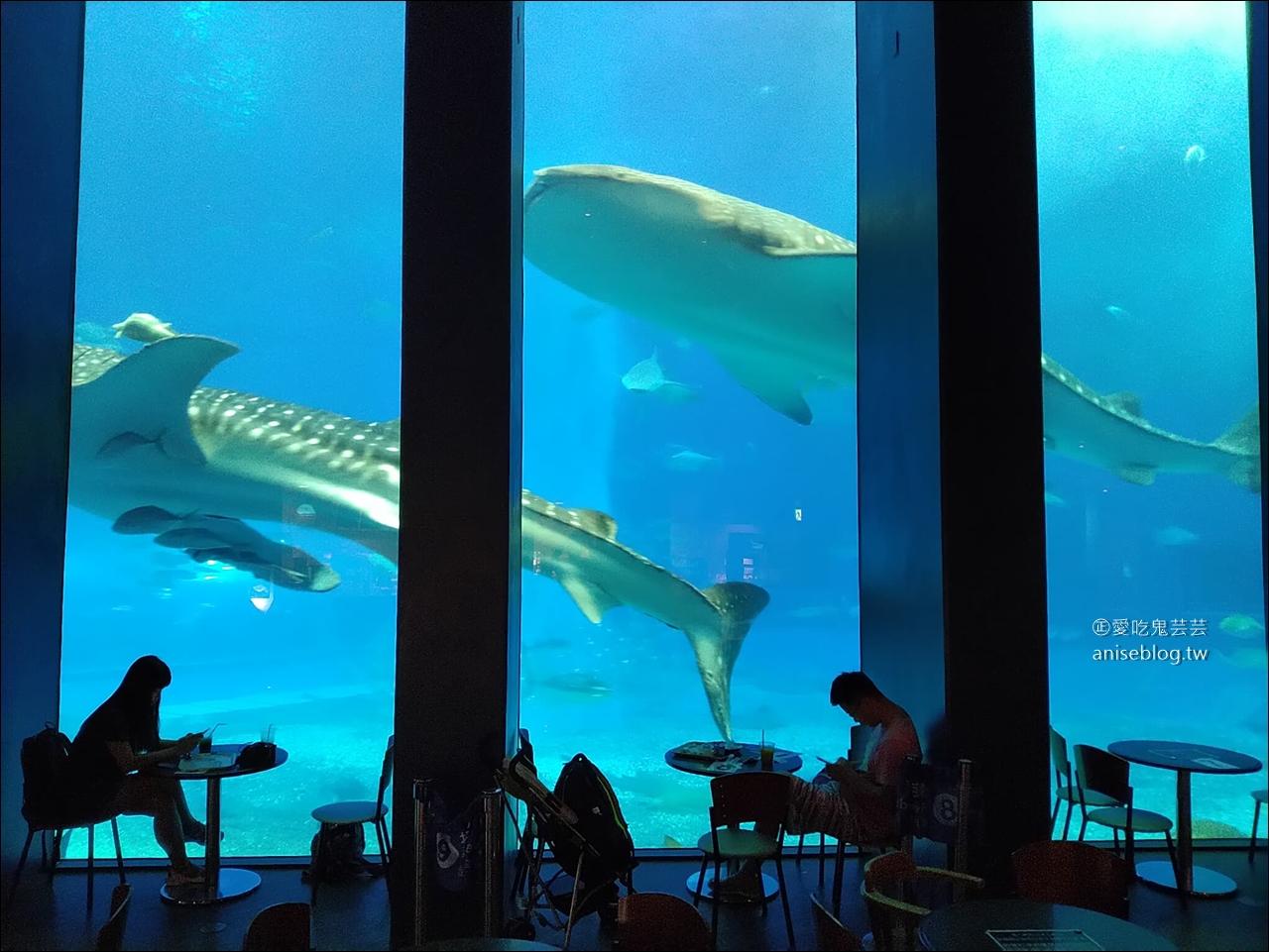 今日熱門文章:沖繩的美麗海水族館,超大鯨鯊池好療癒!