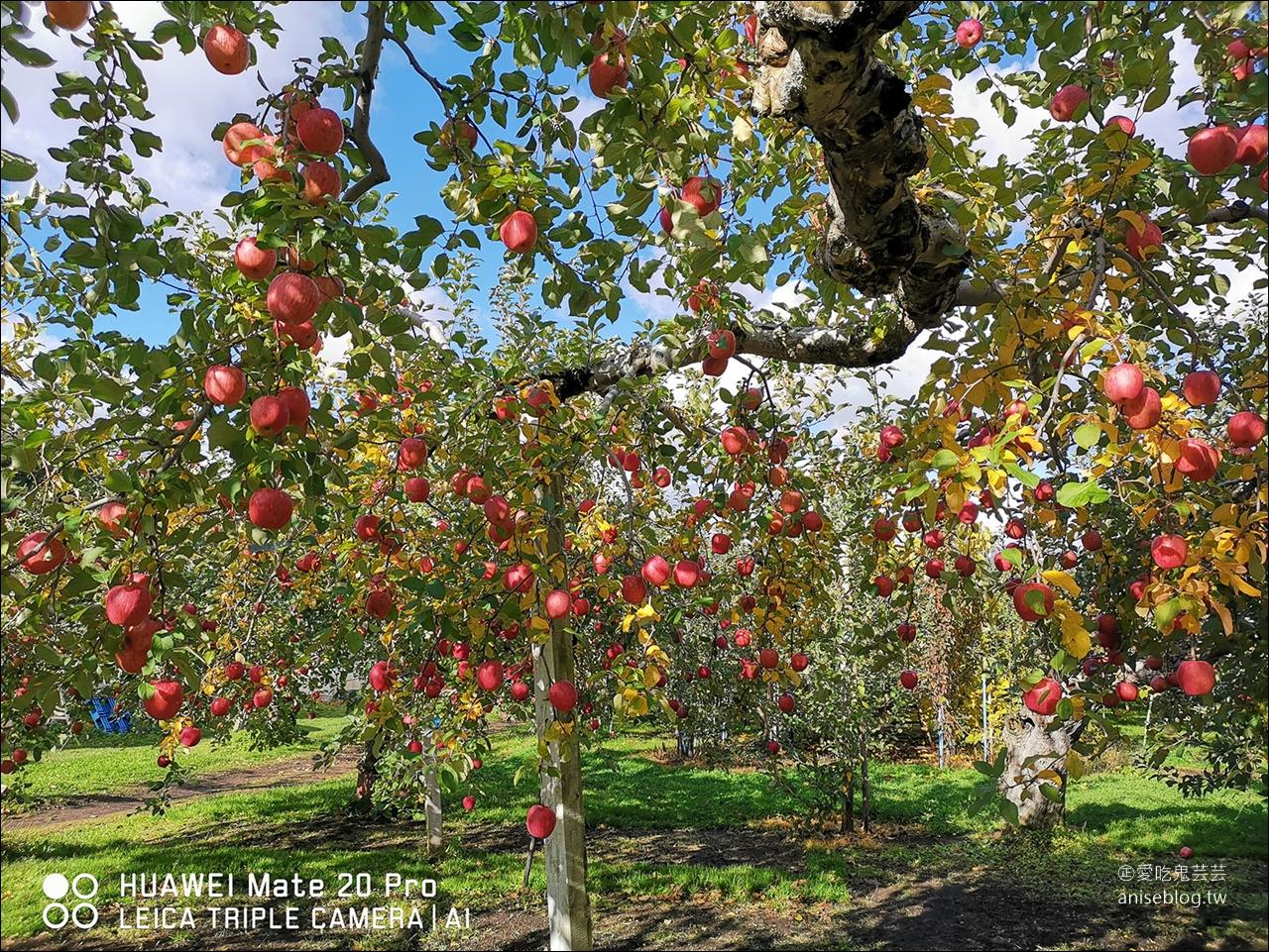 青森半日遊 | 青森觀光果園採蘋果、睡魔之家、長尾中華拉麵、A factory伴手禮採買