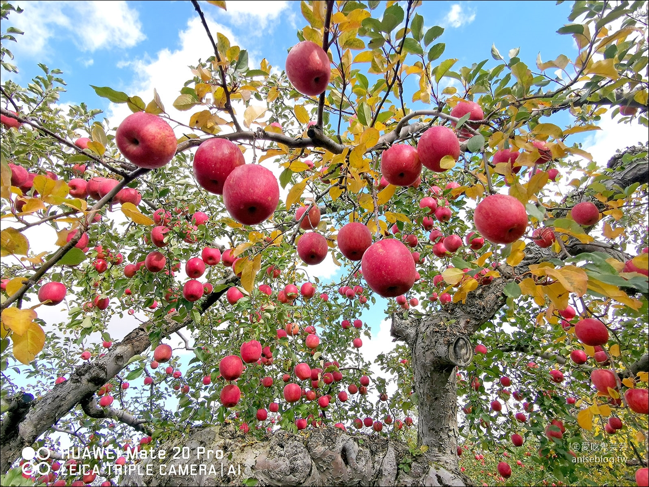 青森半日遊 | 青森觀光果園採蘋果、睡魔之家、長尾中華拉麵、A factory伴手禮採買 @愛吃鬼芸芸