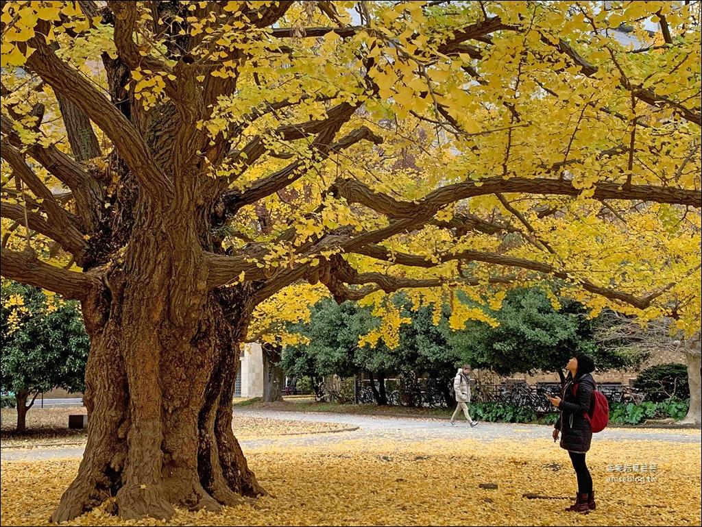 東京大學銀杏含地圖 | 本鄉校區 + 彌生校區 ( 內含東大生協食堂) @愛吃鬼芸芸
