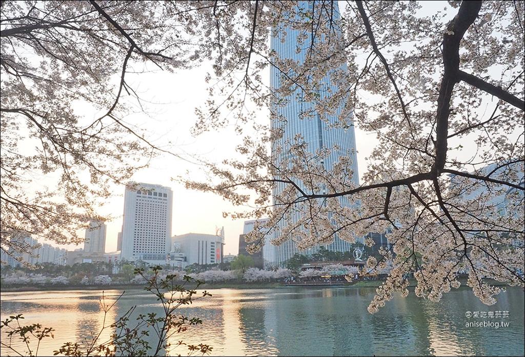 首爾櫻花景點 | 石村湖、汝矣島、首爾森林
