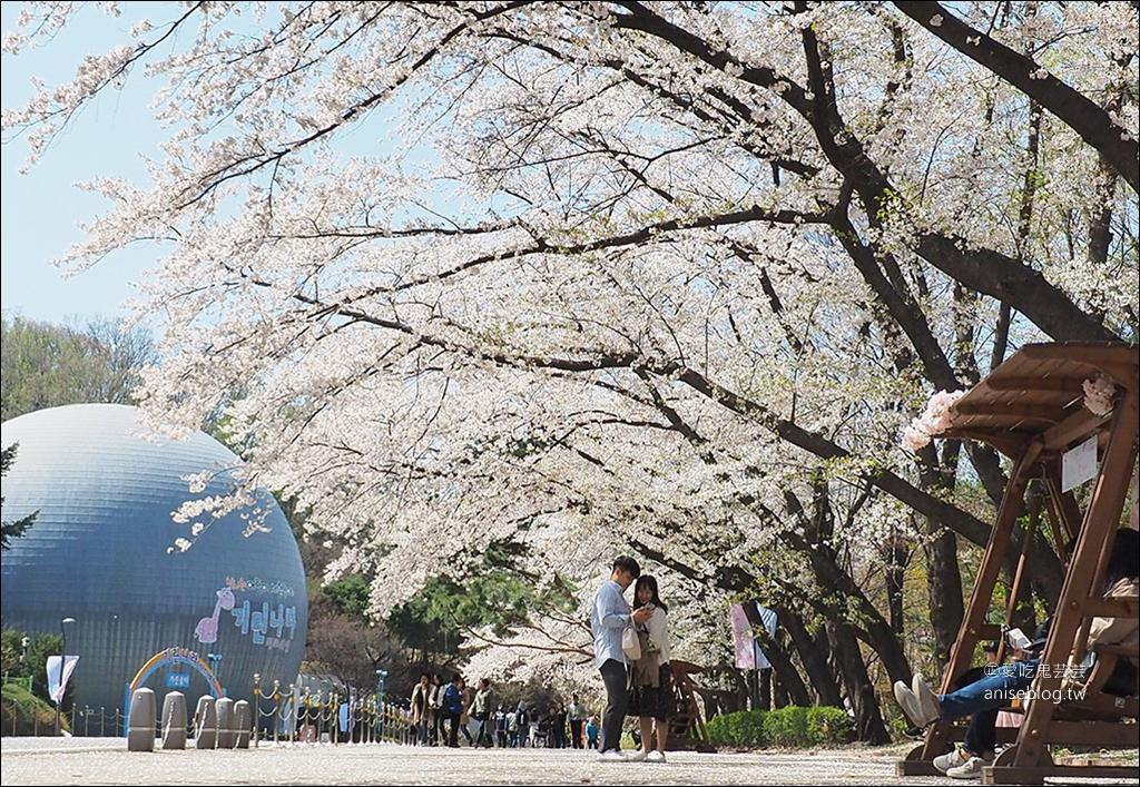 首爾賞櫻一日遊:夢想森林、首爾大公園、賽馬公園 @愛吃鬼芸芸