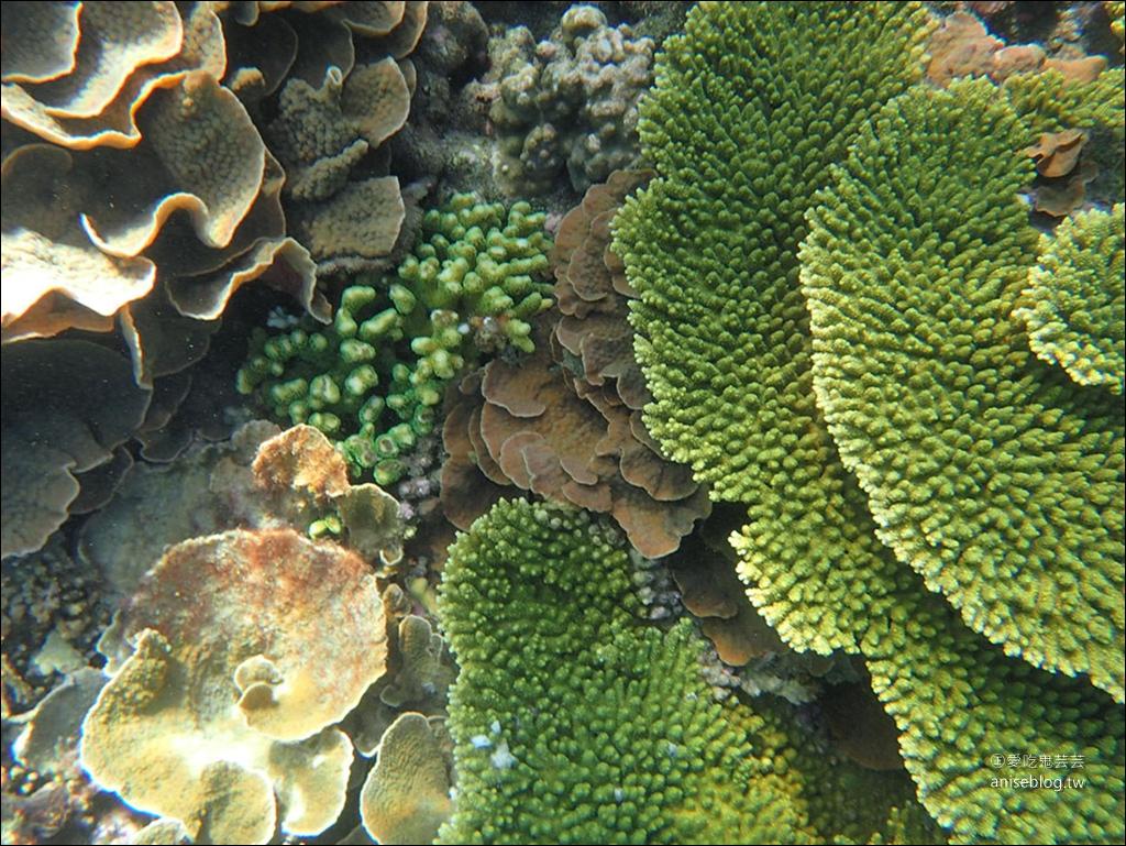 澎湖隱藏版島嶼秘境 | 忘憂島浮潛一日遊