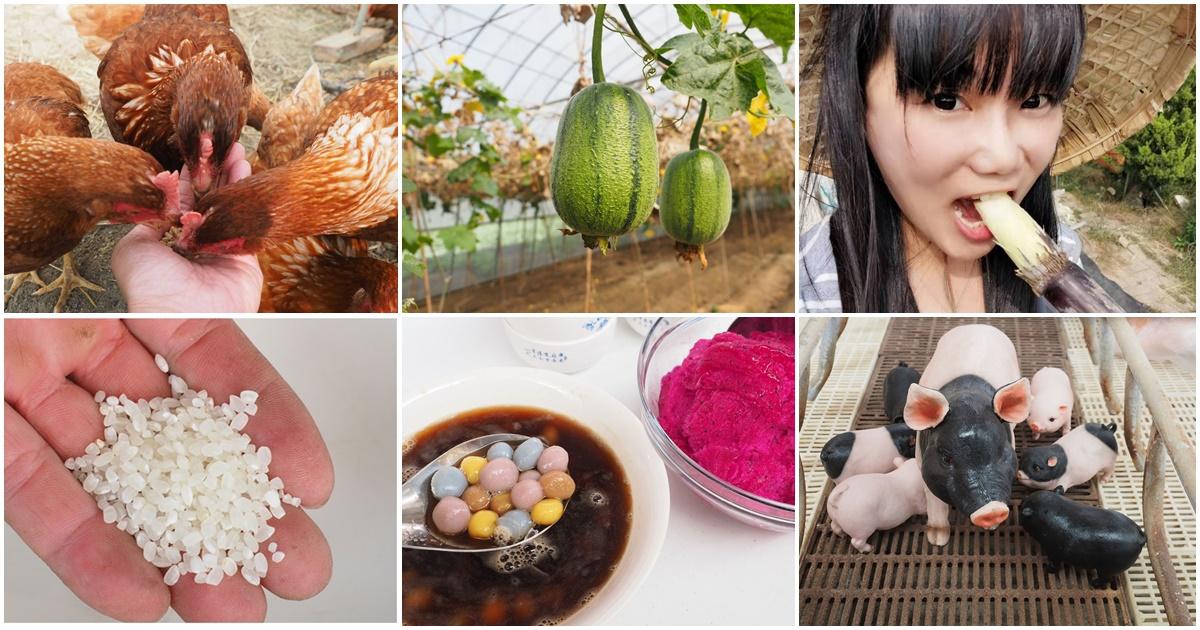 今日熱門文章:嘉義布袋親子景點 | 崇美農場,農村生態導覽、碾米、食農教育、低碳飲食、彩色湯圓 DIY