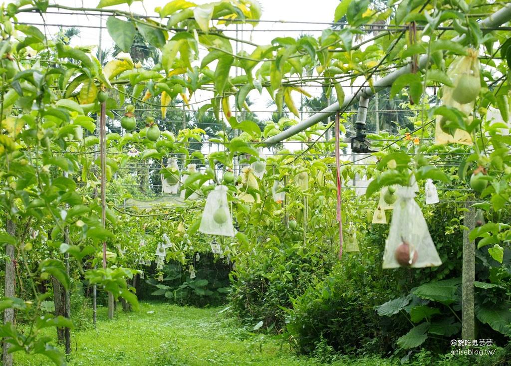 嘉義採果趣!阿舍果園現採無花果、百香果、酪梨豆漿 + 柿子哥農場採柿子、鮮果帶回家