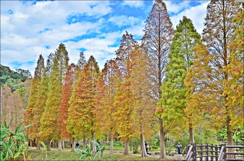 一次收集7個桃竹苗落羽松絕景,拍出如詩如畫的網美照!(姊姊遊記)