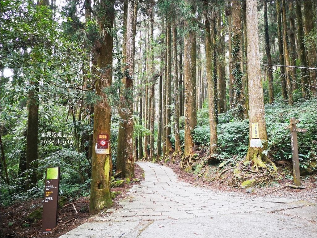奮起湖、頂石棹琉璃光、隙頂雲海,嘉義阿里山公路9條唯美森林步道之旅(姊姊遊記)