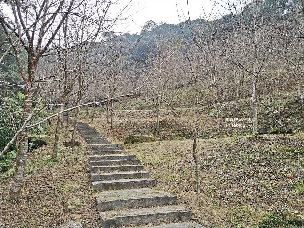 台北、新北櫻花季,8個景點、秘境一次收錄,陸續更新(姊姊遊記)