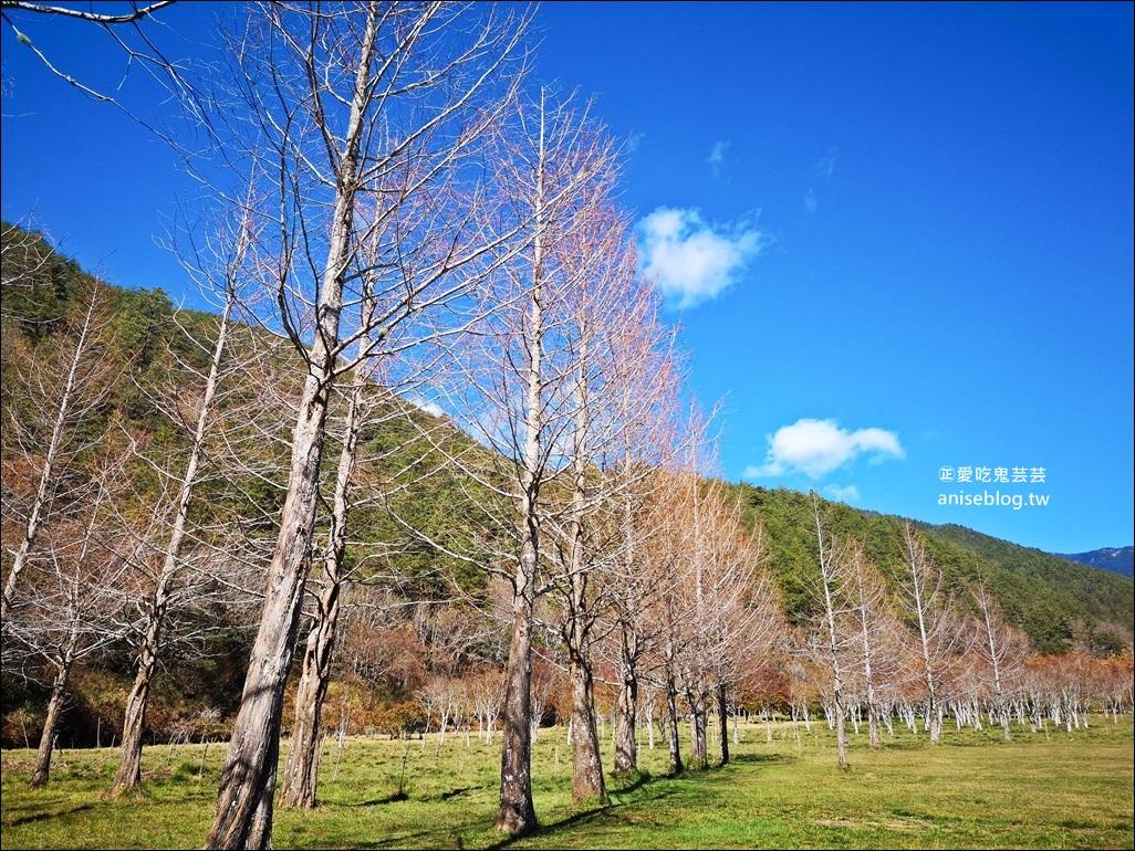 武陵農場櫻花季一日遊行程,宜蘭、台中景點(姊姊遊記)