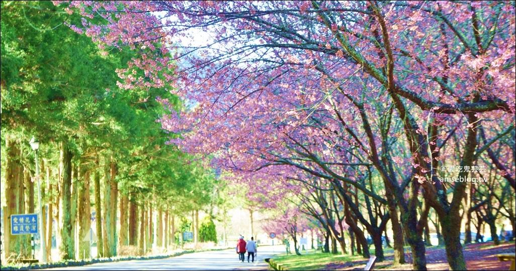 武陵農場櫻花季一日遊行程,宜蘭、台中景點(姊姊遊記) @愛吃鬼芸芸
