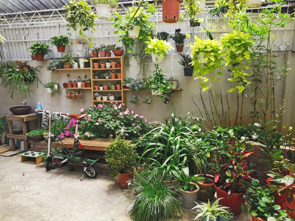 福森院子,中正藝文特區全日早午餐,在植物滿滿的院子來個早餐約會吧!