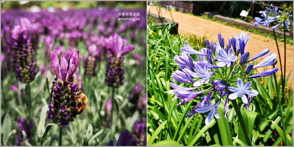 內雙溪自然中心藥用植物園,台北近郊親子旅行(姊姊遊記) @愛吃鬼芸芸