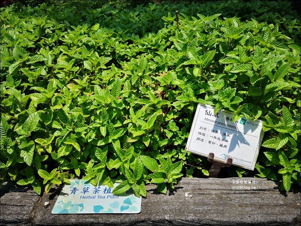 內雙溪自然中心藥用植物園,台北近郊親子旅行(姊姊遊記)