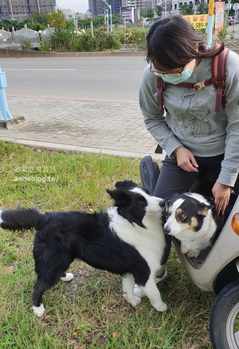 桃園 | 走走咖啡,在地人大推的專業咖啡店 (文末有邊境牧羊犬+柯基犬)
