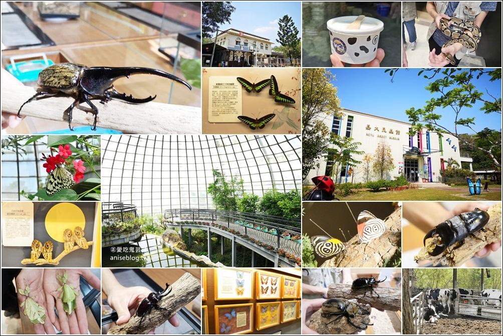 網站近期文章:嘉大昆蟲館,嘉義親子景點室內展館(姊姊遊記)