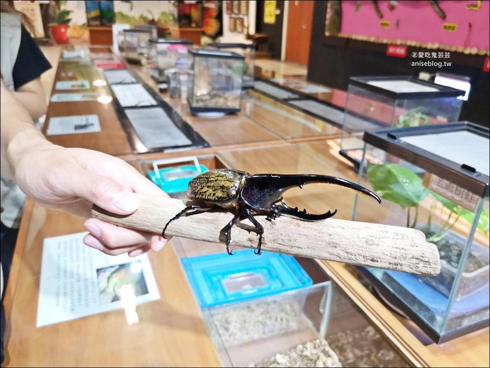 嘉大昆蟲館,嘉義親子景點室內展館(姊姊遊記)