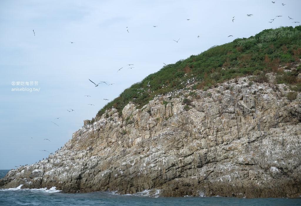 全球僅存百隻 「神話之鳥」,黑嘴端鳳頭燕鷗,馬祖北竿看得到!