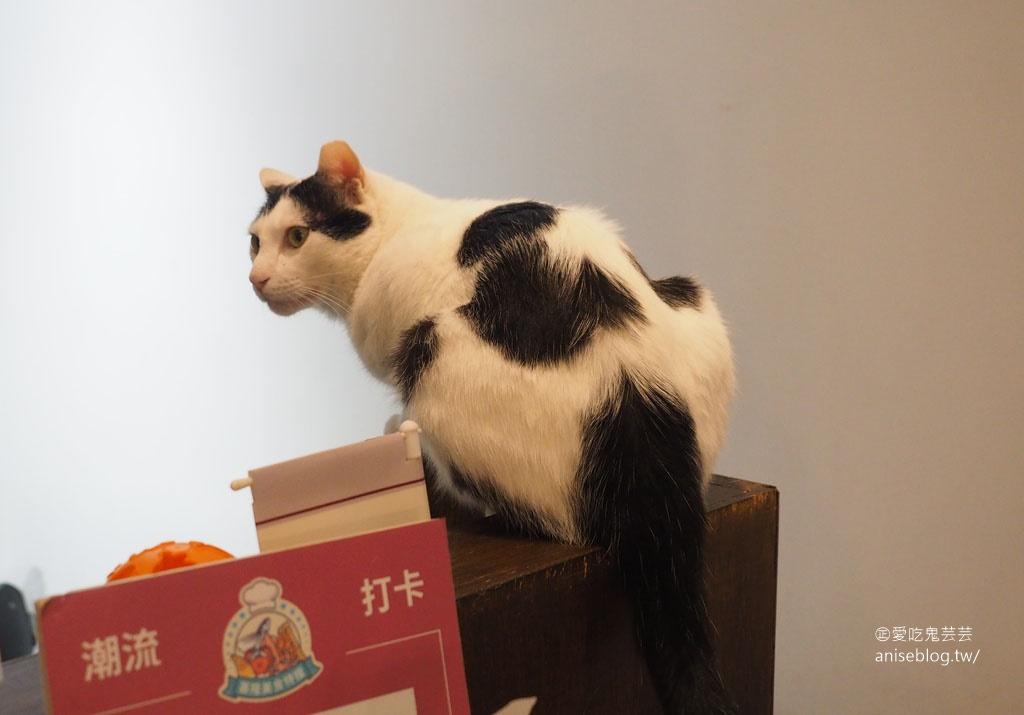 貓町咖啡,基隆巷弄內萌萌貓咪咖啡館,有吉古拉漢堡!